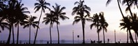 Palm trees on the beach, Waikiki, Honolulu, Oahu, Hawaii (black and white) Fine Art Print