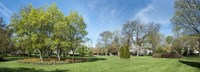 """Tulips withTrees at Sherwood Gardens, Baltimore, Maryland, USA by Panoramic Images - 27"""" x 9"""""""