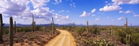 Road, Saguaro National Park, Arizona, USA Fine Art Print