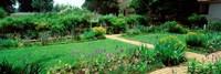 USA, Virginia, Williamsburg, colonial garden Fine Art Print