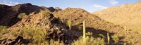 "Cactus plants on a landscape, Sierra Estrella Wilderness, Phoenix, Arizona, USA by Panoramic Images - 36"" x 12"""