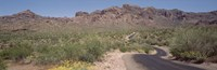 """USA, Arizona, Dreamy Draw Park, Cactus along a road by Panoramic Images - 36"""" x 12"""""""