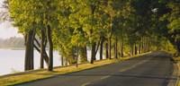 "Trees along a road, Lake Washington Boulevard, Seattle, Washington State, USA by Panoramic Images - 36"" x 12"""
