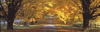 """Road, Baltimore County, Maryland, USA by Panoramic Images - 36"""" x 12"""""""