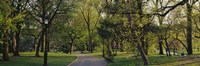 Trees In A Park, Central Park, NYC, New York City, New York State, USA by Panoramic Images - various sizes