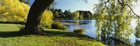 """Willow Tree By A Lake, Green Lake, Seattle, Washington State, USA by Panoramic Images - 36"""" x 12"""""""