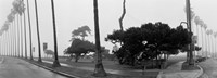 """Palm Trees And Fog, San Diego, California by Panoramic Images - 36"""" x 12"""" - $34.99"""