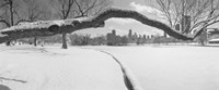 """Bare trees in a park, Lincoln Park, Chicago, Illinois, USA by Panoramic Images - 36"""" x 12"""" - $34.99"""