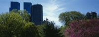 """Low angle view of skyscrapers viewed from a park, Central Park, Manhattan, New York City, New York State, USA by Panoramic Images - 36"""" x 12"""""""