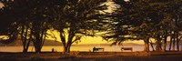 "Trees In A Field, Crissy Field, San Francisco, California, USA by Panoramic Images - 36"" x 12"" - $34.99"