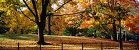 "Trees in a forest, Central Park, Manhattan, New York City, New York, USA by Panoramic Images - 36"" x 12"""