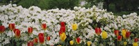 """Flowers in a garden, Sherwood Gardens, Baltimore, Maryland, USA by Panoramic Images - 36"""" x 12"""""""