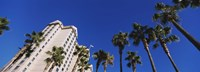 """Low angle view of palm trees, Downtown San Jose, San Jose, Silicon Valley, Santa Clara County, California by Panoramic Images - 36"""" x 12"""", FulcrumGallery.com brand"""