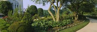 """Plants in a garden, Bahai Temple Gardens, Wilmette, New Trier Township, Chicago, Cook County, Illinois, USA by Panoramic Images - 36"""" x 12"""", FulcrumGallery.com brand"""