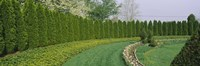 """Row of arbor vitae trees in a garden, Ladew Topiary Gardens, Monkton, Baltimore County, Maryland, USA by Panoramic Images - 36"""" x 12"""" - $34.99"""