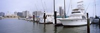 """Yachts at a harbor with buildings in the background, Corpus Christi, Texas, USA by Panoramic Images - 36"""" x 12"""""""