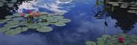 "Water lilies in a pond, Denver Botanic Gardens, Denver, Denver County, Colorado, USA by Panoramic Images - 36"" x 12"""