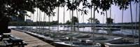 Boats moored at a dock, Charles River, Boston, Suffolk County, Massachusetts, USA Fine Art Print