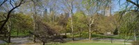 """Trees in a park, Central Park West, Central Park, Manhattan, New York City, New York State, USA by Panoramic Images - 36"""" x 12"""""""
