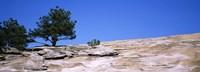 """Trees on a mountain, Stone Mountain, Atlanta, Fulton County, Georgia by Panoramic Images - 36"""" x 12"""""""