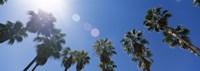 "Low angle view of palm trees, Downtown San Jose, San Jose, Santa Clara County, California, USA by Panoramic Images - 36"" x 12"", FulcrumGallery.com brand"