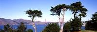 "View of a suspension  bridge through trees, Golden Gate Bridge, San Francisco Bay, San Francisco, California, USA by Panoramic Images - 36"" x 12"""
