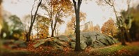 """Trees in a park, Central Park, Manhattan, New York City, New York State, USA by Panoramic Images - 36"""" x 12"""""""