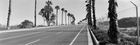 """Palm trees along a road, San Diego, California, USA by Panoramic Images - 36"""" x 12"""" - $34.99"""