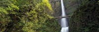 """Waterfall in a forest, Multnomah Falls, Columbia River Gorge, Portland, Multnomah County, Oregon, USA by Panoramic Images - 36"""" x 12"""""""