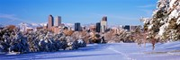 """Denver city in winter, Colorado by Panoramic Images - 36"""" x 12"""", FulcrumGallery.com brand"""