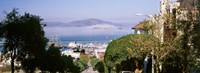 """Trees along the Hyde Street, San Francisco, California, USA by Panoramic Images - 36"""" x 12"""" - $34.99"""