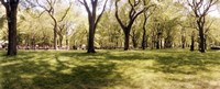 """Trees and grass in a Central Park in the spring time, New York City, New York State, USA by Panoramic Images - 36"""" x 12"""""""