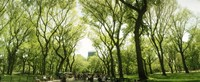 """Central Park in the spring time, New York City by Panoramic Images - 36"""" x 12"""""""