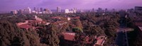 """University campus, University Of California, Los Angeles, California, USA by Panoramic Images - 36"""" x 12"""""""