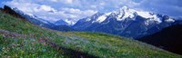 """Wildflowers Along Mountainside, Zillertaler, Austria by Panoramic Images - 27"""" x 9"""""""