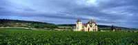 "Grand Cru Vineyard, Burgundy, France by Panoramic Images - 27"" x 9"""