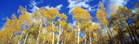 """USA, Colorado, Uncompahgre Nationa Forest by Panoramic Images - 27"""" x 9"""""""