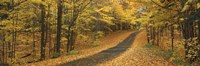 """Autumn Road, Emery Park, New York State, USA by Panoramic Images - 27"""" x 9"""""""