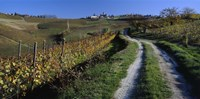 """Italy, Piemont, road by Panoramic Images - 27"""" x 9"""""""