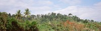 """Plant growth in a forest, Manual Antonia National Park, Quepos, Costa Rica by Panoramic Images - 27"""" x 9"""""""