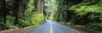 "Road passing through a forest, Prairie Creek Redwoods State Park, California, USA by Panoramic Images - 27"" x 9"""