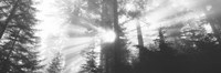 """Road, Redwoods Park, California, USA by Panoramic Images - 27"""" x 9"""""""