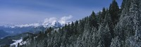 """Trees in a forest, Interlaken, Berne Canton, Switzerland by Panoramic Images - 27"""" x 9"""""""