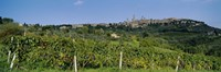 """Low Angle View Of A Vineyard, San Gimignano, Tuscany, Italy by Panoramic Images - 27"""" x 9"""""""