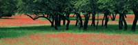 """Indian Paintbrushes And Scattered Oaks, Texas Hill Co, Texas, USA by Panoramic Images - 27"""" x 9"""""""
