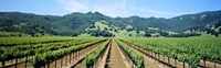 """Napa Valley Vineyards Hopland, CA by Panoramic Images - 27"""" x 9"""""""