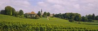 WIne country with buildings in the background, Village near Geneva, Switzerland Fine Art Print