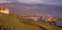 Vineyard at a hillside, Lake Geneva, Vevey, Vaud, Switzerland Fine Art Print