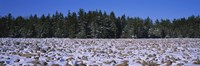 "Rocks in snow covered landscape, Hickory Run State Park, Pocono Mountains, Pennsylvania, USA by Panoramic Images - 27"" x 9"""