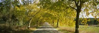 """Trees along the road, Portugal by Panoramic Images - 27"""" x 9"""""""